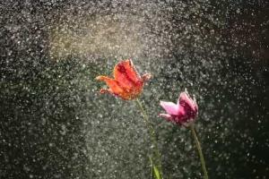 Твой дождь