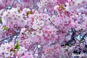 И всё-таки идёт весна