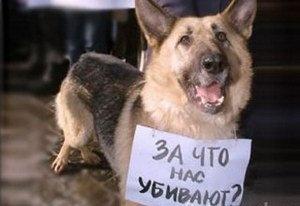 В мире много бездомных собак