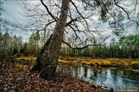 Лес в ноябре