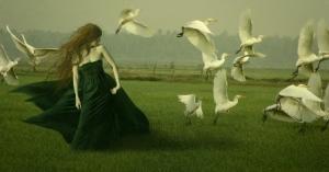 Птицы побирушки